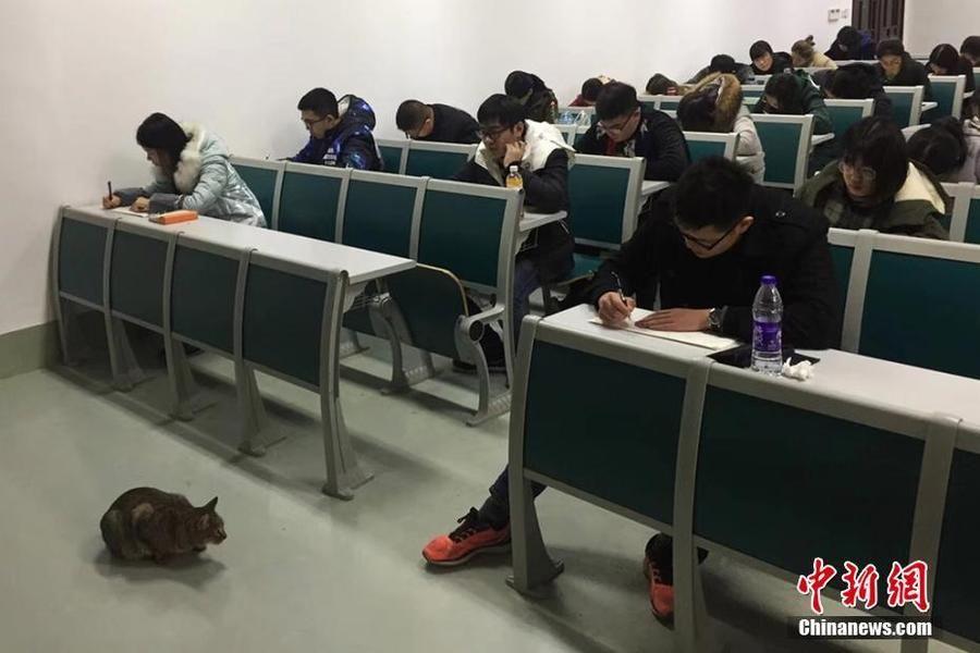 """南京农业大学猫咪""""监考""""引围观"""