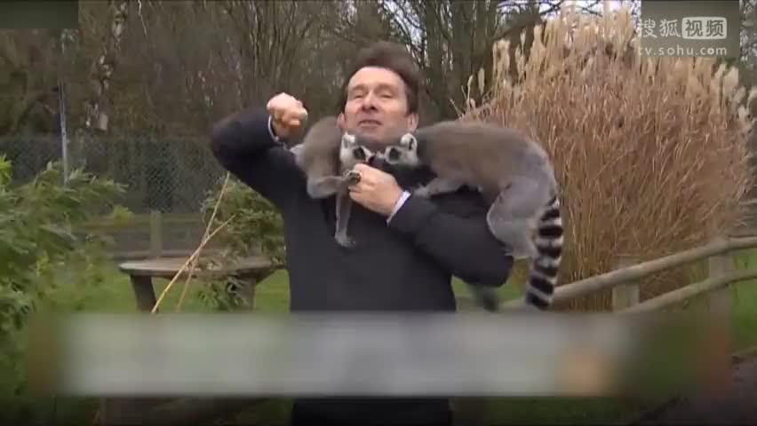 当出镜记者遇到一群狐猴 只剩下无助