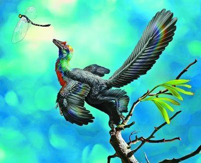 """中国发现1.61亿年前""""彩虹恐龙"""":羽毛绚丽如蜂鸟"""