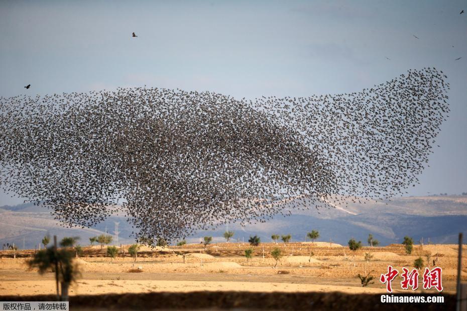 以色列群鸟归巢