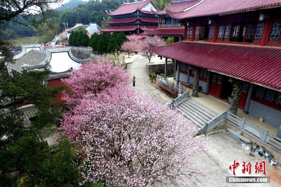 冬日里的一抹红 福州千年古刹梅花盛开