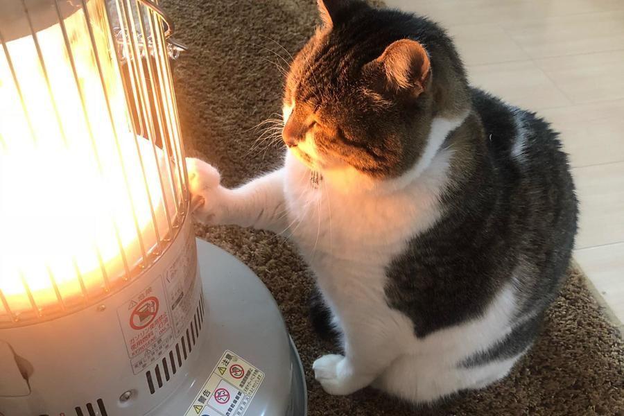 日本萌猫烤火吸粉无数 守护暖气寸步不离