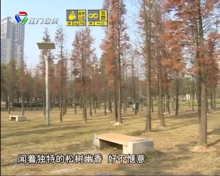 """鹤山:红叶""""温暖""""了寒冬"""
