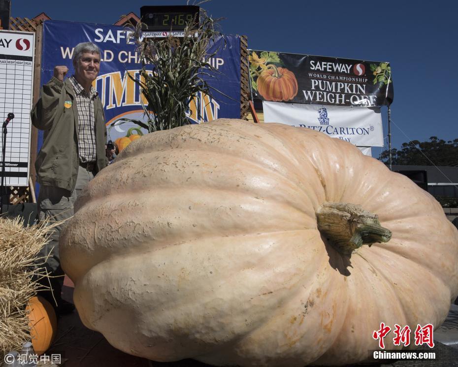 """美国加州举办南瓜称重比赛 近1吨""""大胖子""""夺冠"""