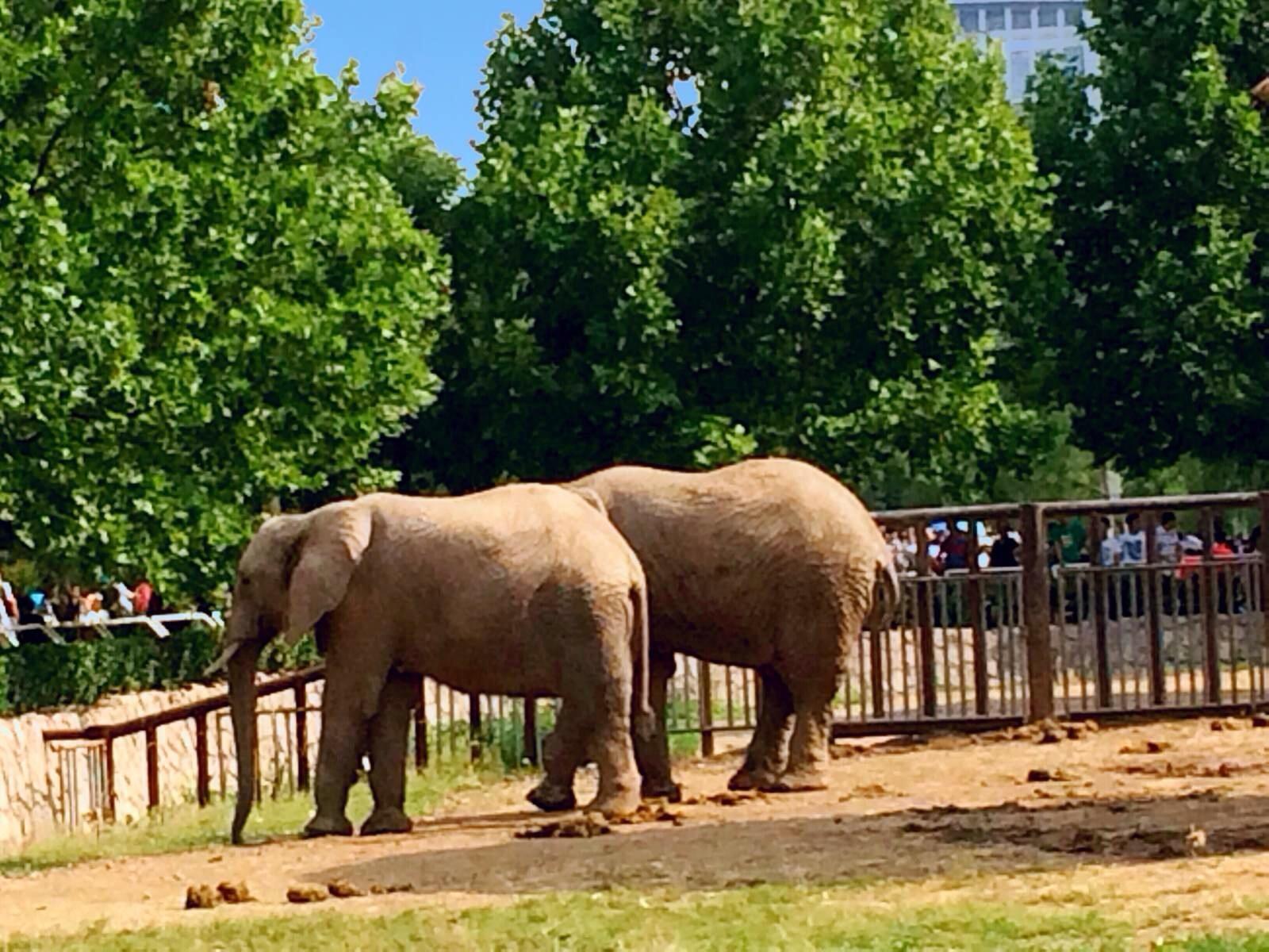 北京动物园大象走失? 警方:把大象数了一遍,都在