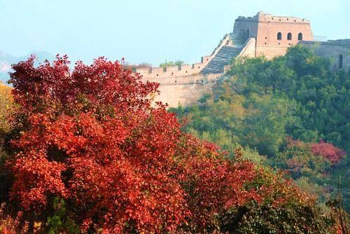 受降温影响 北京八达岭公园红叶进入最佳观赏期