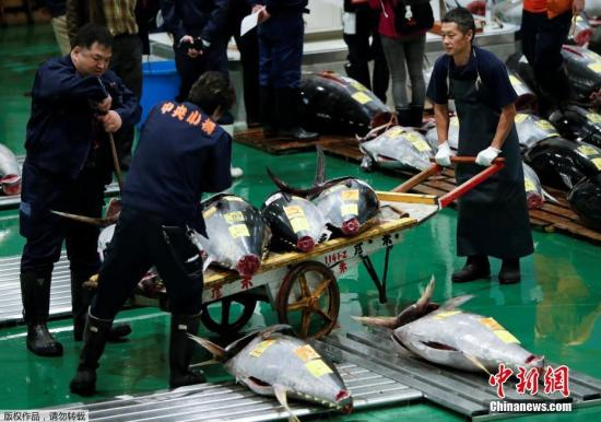 """新""""日本厨房""""首次竞拍:214公斤金枪鱼拍出最高价(图)"""