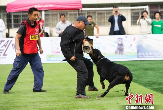 中国罗威纳犬展举行