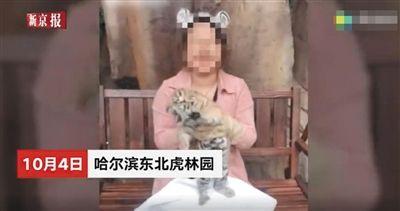 """黑龙江叫停""""付费与幼虎合影"""" 约谈东北虎林园负责人"""