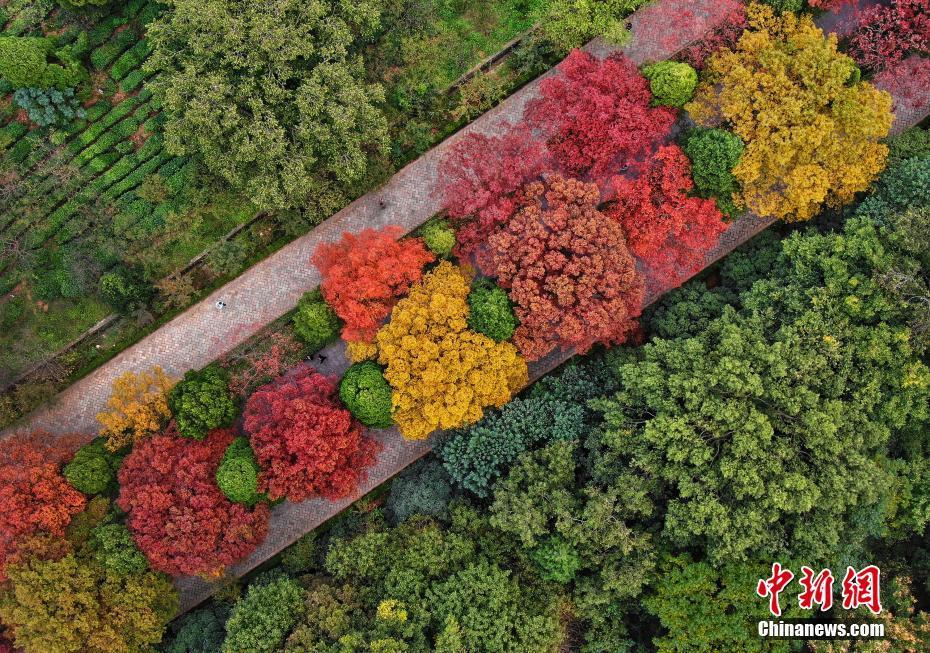 """南京紫金山""""色彩斑斓""""迎来最美季"""