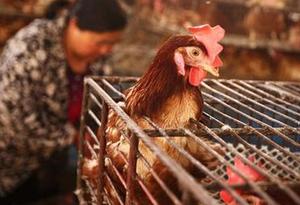 佛山活禽市场11月至次年3月每月休市5天