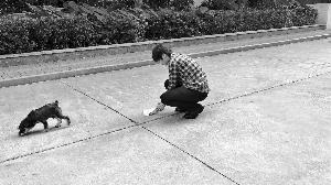 广州市民积极践行文明养犬 成立义工队清理狗粪便