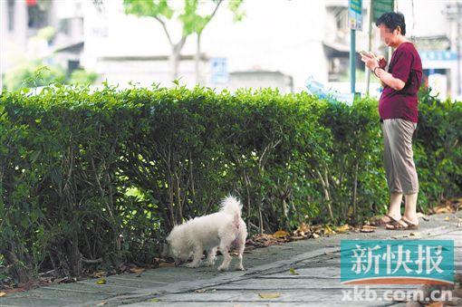 记者观察:不文明养狗原来会给社区带来这么多麻烦!