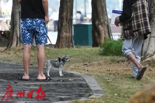两狗打架,一狗主被咬,谁来担责?法院判:不牵绳的一方…