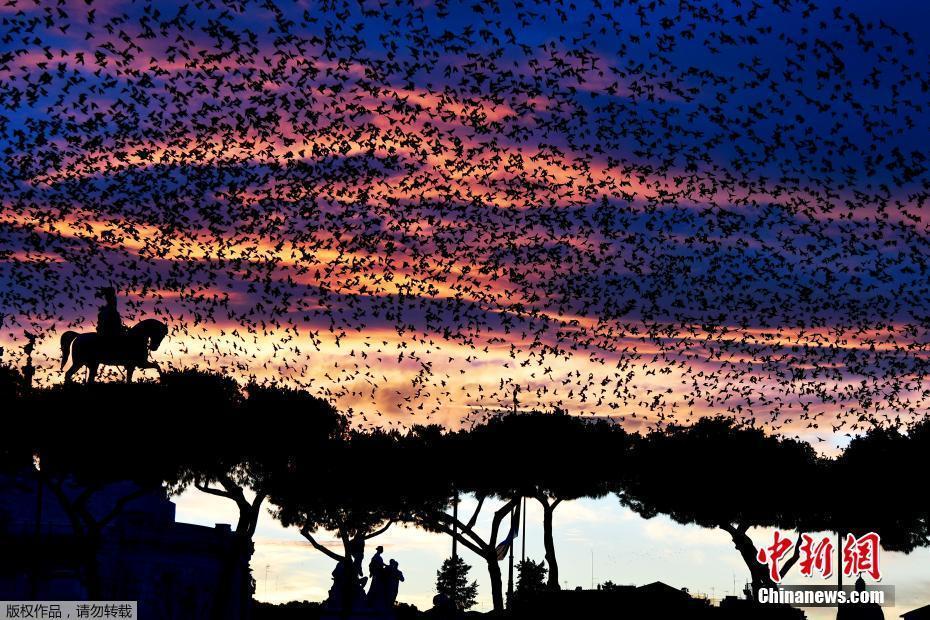 罗马上空椋鸟成群
