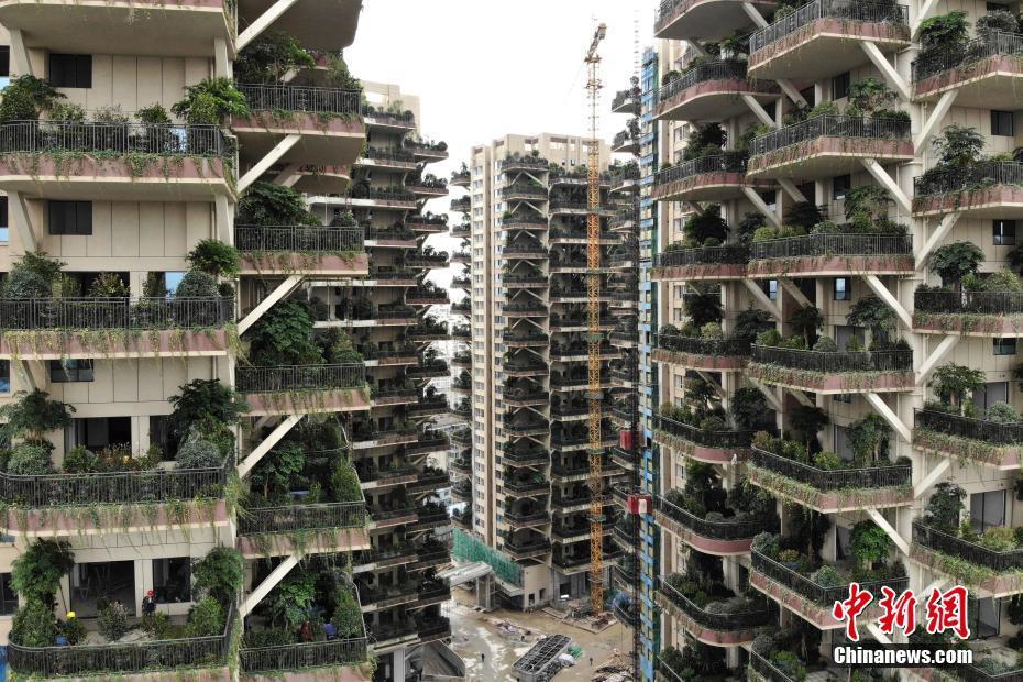 成都建垂直森林住宅