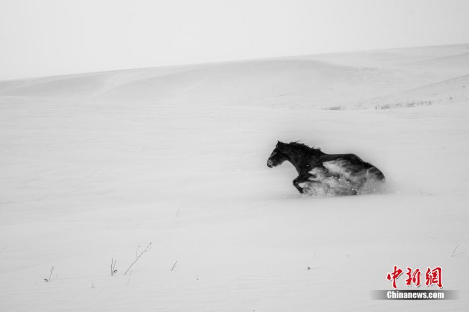 草原风雪中的蒙古马