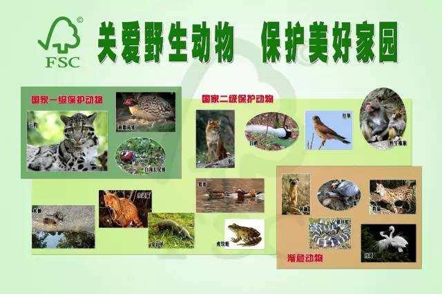 广东明年起5年内全面禁猎野生鸟类