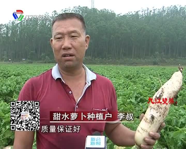 崖门第一批甜水萝卜上市了  自摘价每斤2-2.5元左右