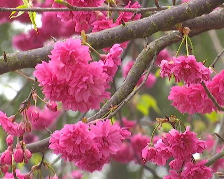 江门春意浓 正是踏春赏花时