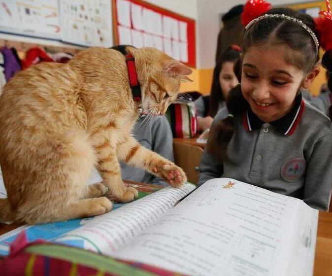 土耳其猫咪出入课堂