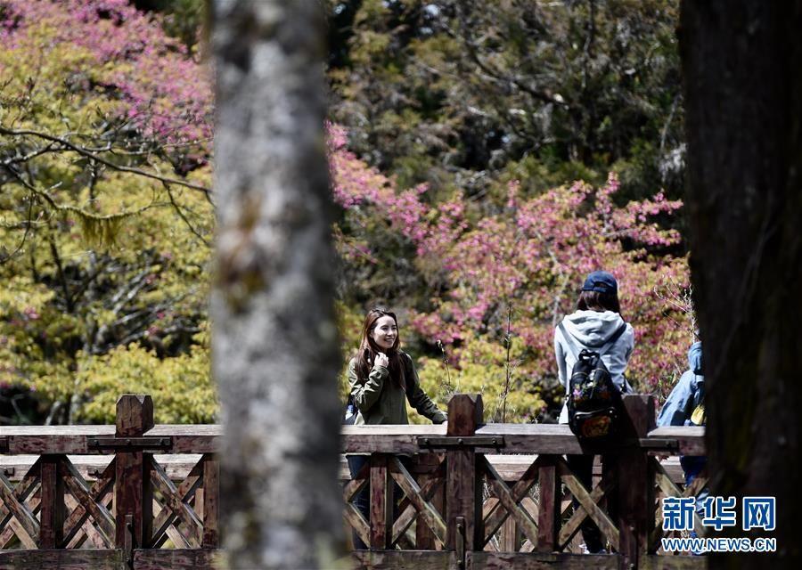 台湾阿里山入春