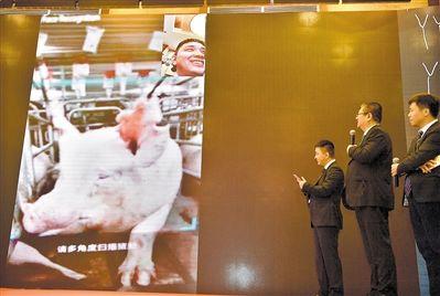 继人脸识别后猪脸识别技术诞生