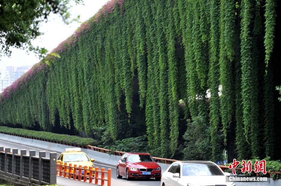 福州立交桥穿绿衣