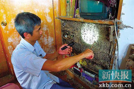 广州一业主五年未归家 结果全屋被蛀变蚁巢
