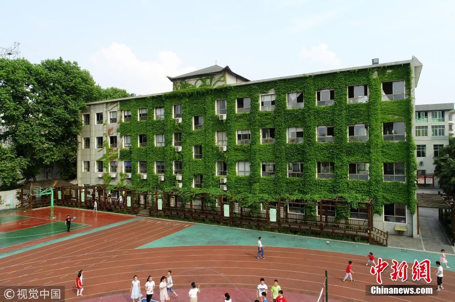 湖北教学楼长满爬山虎