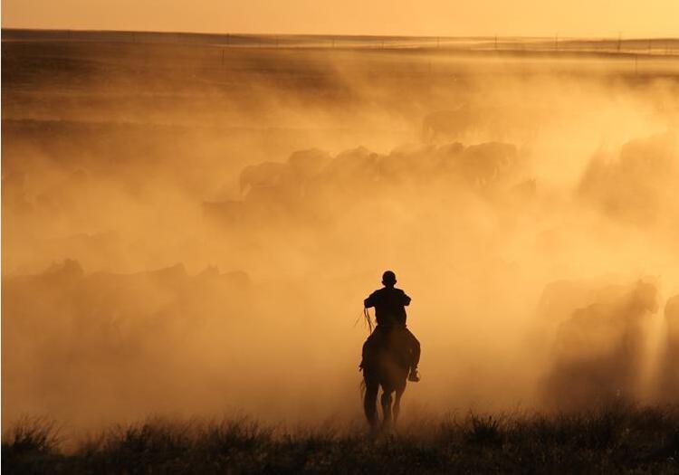 新疆北部牧民转场 夕阳下赶马场面美如画卷