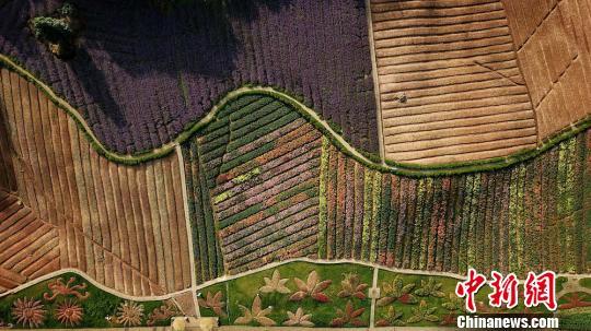 泸州纳溪花草为针线
