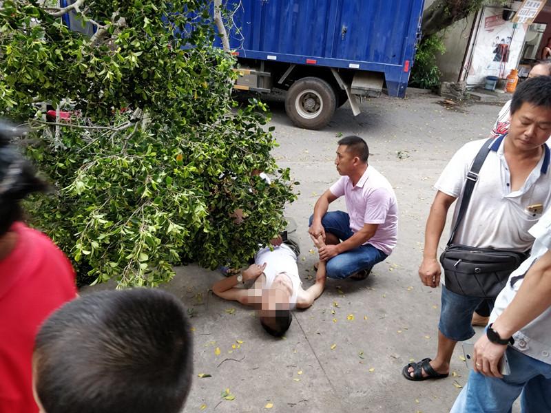 飞来横祸!货车撞倒路边大树砸伤路人