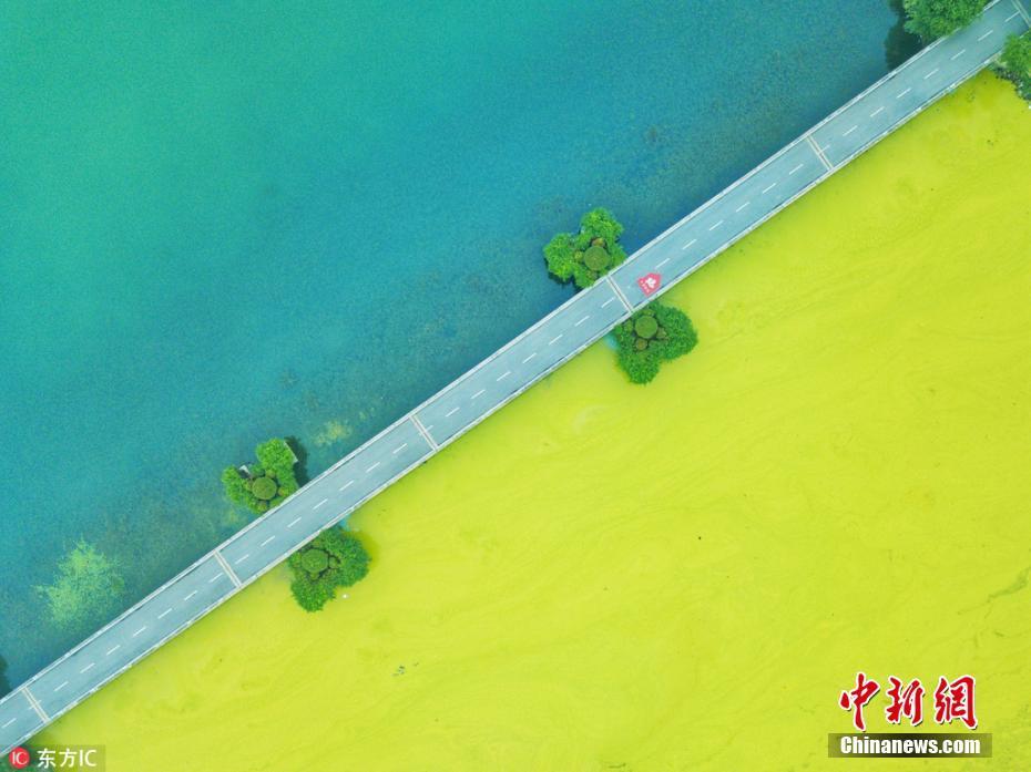 无锡太湖黄色蓝藻泛滥