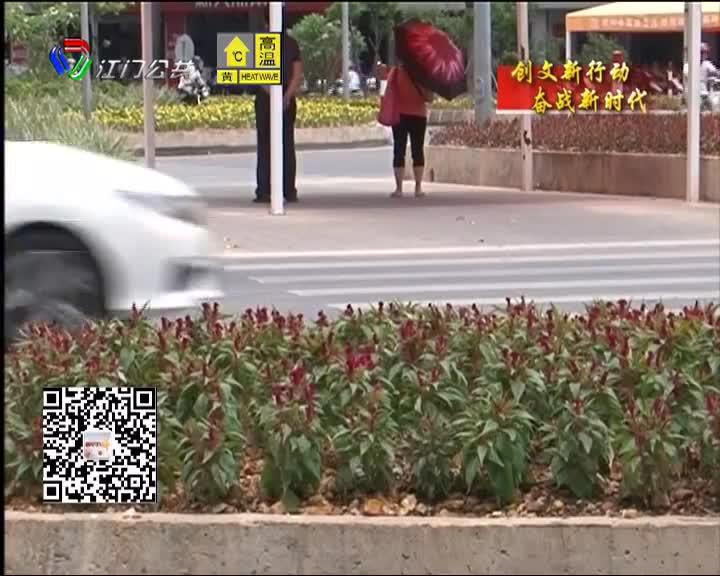 新会区会城道路绿化景观越来越美