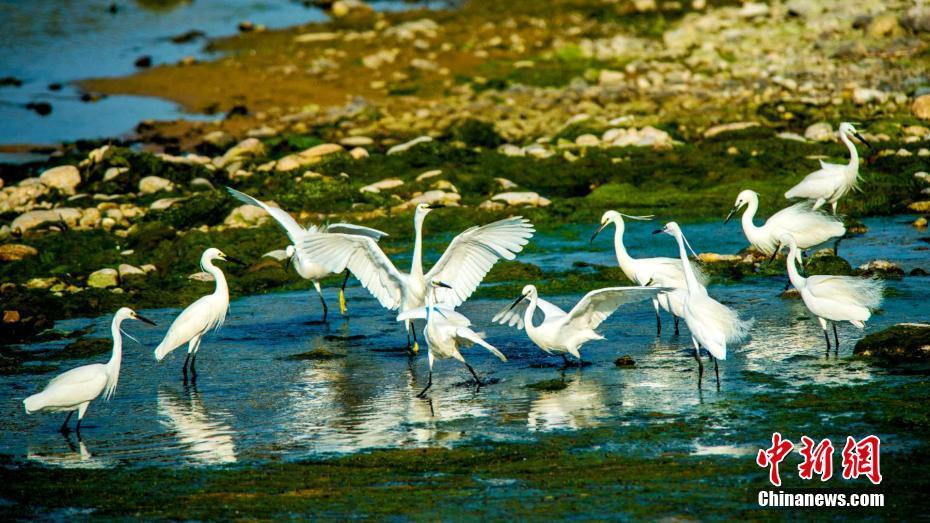 济南湿地引白鹭栖息
