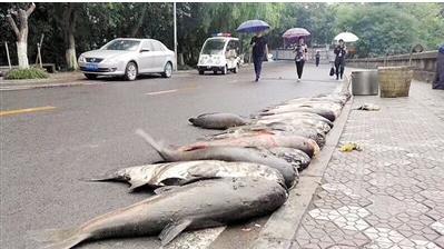 重庆高校捞出数条大鱼