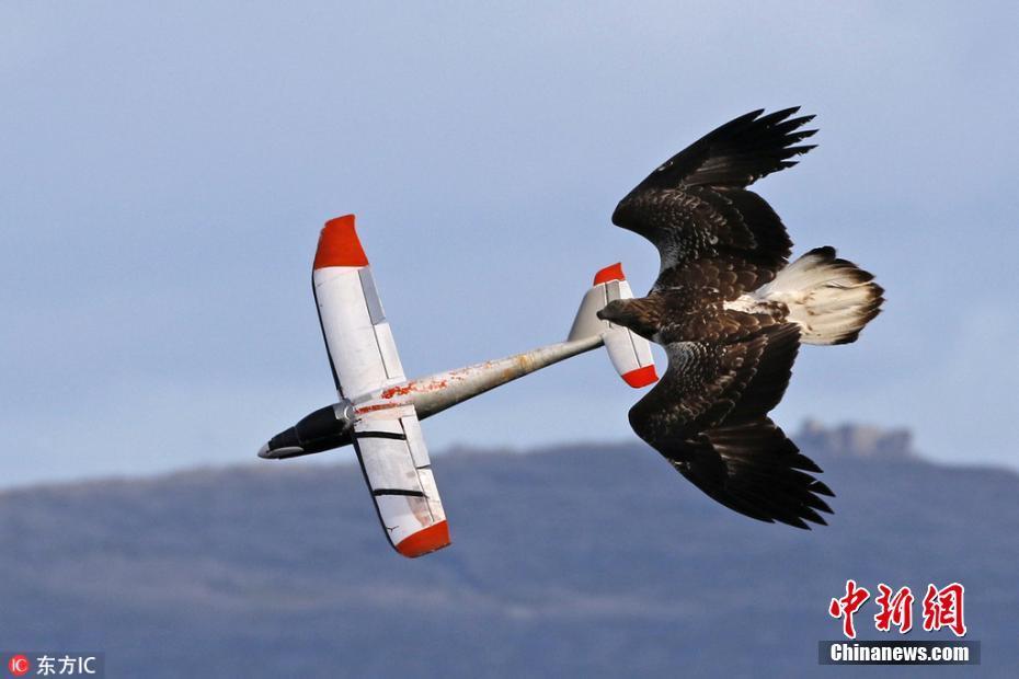 海雕同滑翔机模型竞速