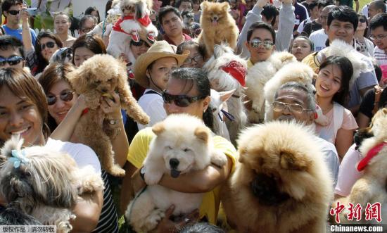 澳门逸园赛狗会将结束营业 600多只赛犬去处受关注