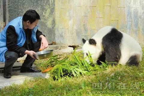 武汉大熊猫伟伟受虐待