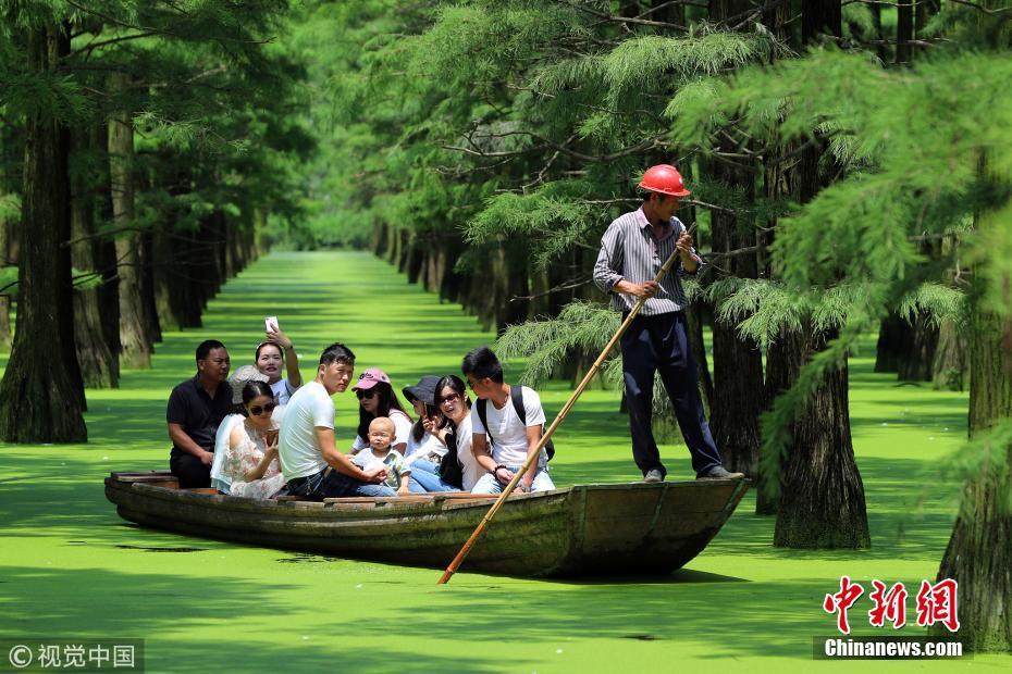 """武汉""""水上森林""""成网红地 吸引游客盛夏""""打卡"""""""