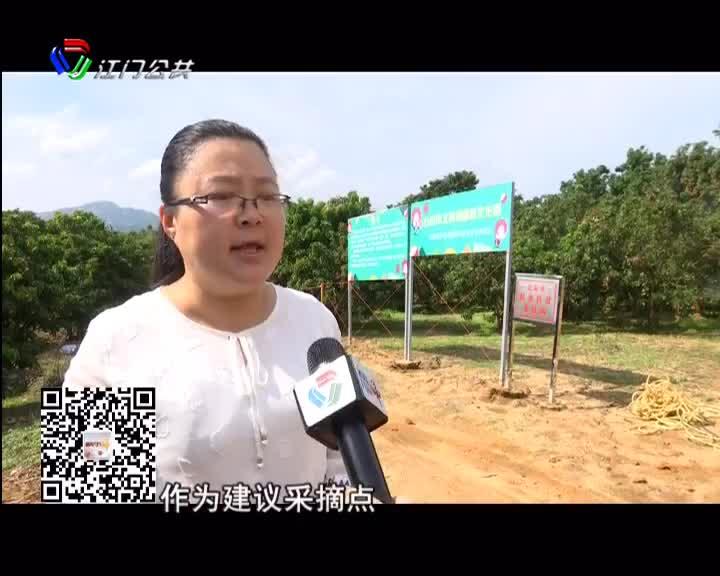台山北陡第二届荔枝节28日开幕