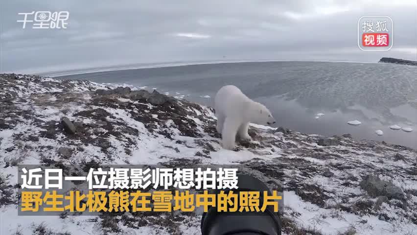 摄影师为拍照徒手吓跑北极熊