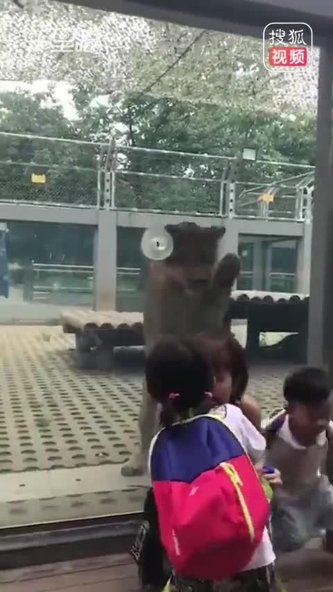 """妈妈被狮子""""偷袭""""女儿勇护"""
