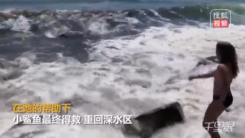 比基尼少女勇救海滩搁浅需鱼获网友点赞