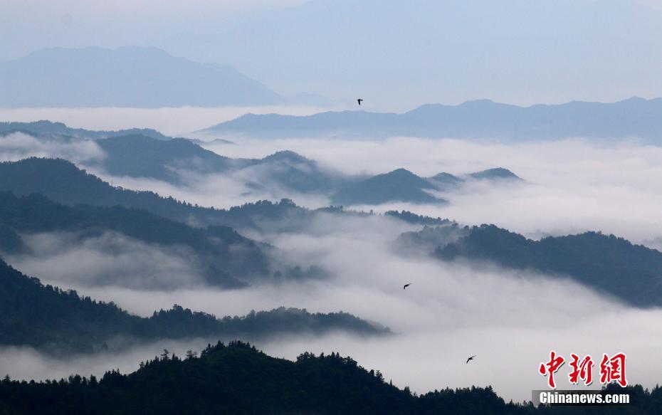 江西遂川山谷云雾缭绕 似水墨丹青画