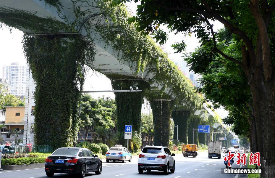 厦门一高架桥披绿衣