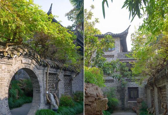 隐藏在泰州繁华闹市的私宅大院