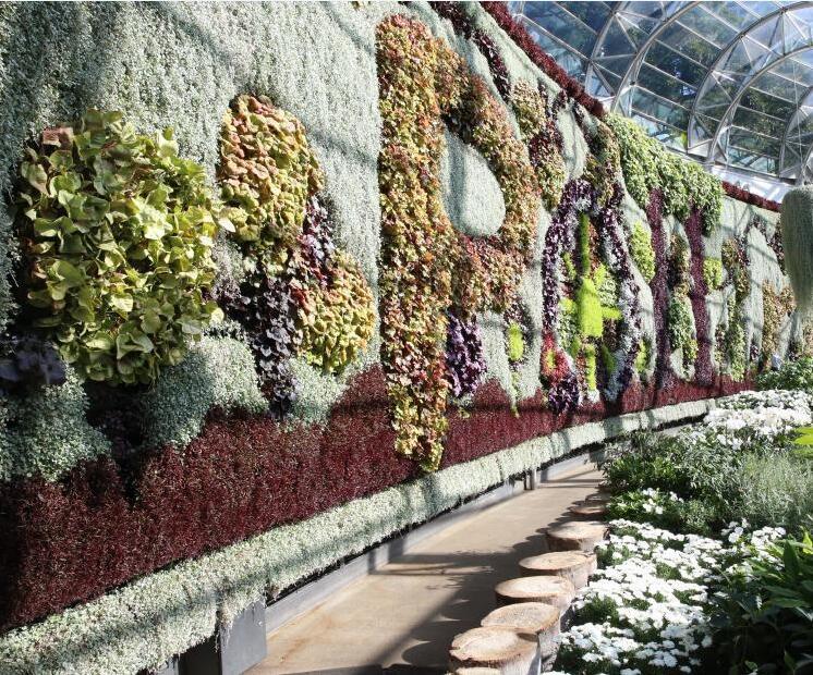 悉尼展南半球最大植物墙