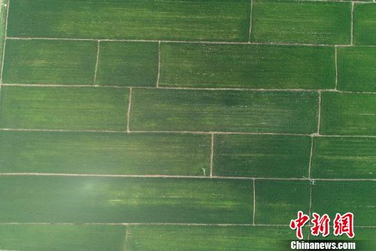航拍京南万亩稻田湿地